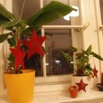 Weihnachtlich dekorierte Banane