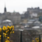 Schiffchen in Edinburgh