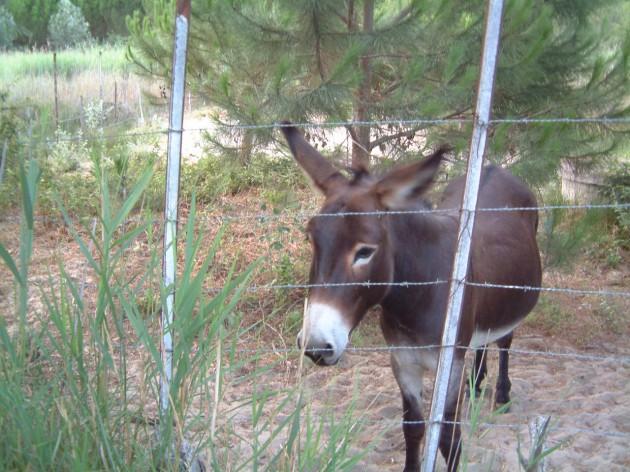 Esel in Frankreich