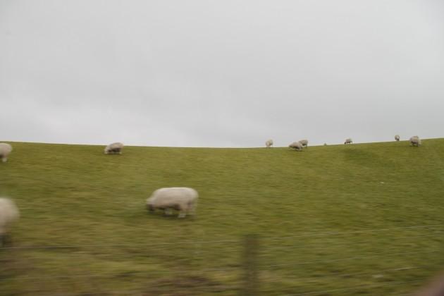 Mit dem Mietwagen durch Schottland