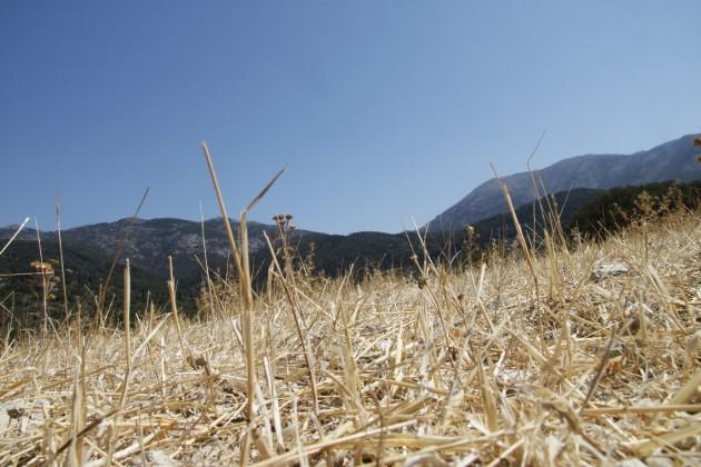 Vertrocknete Landschaft am Mühlenwanderweg