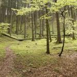 Wald bei Aschau, Wanderweg 22