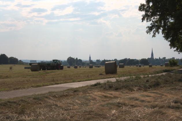 Heuernte auf den Elbwiesen vor Dresden