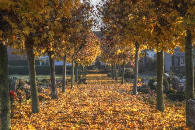 Herbstlaub auf dem Friedhof