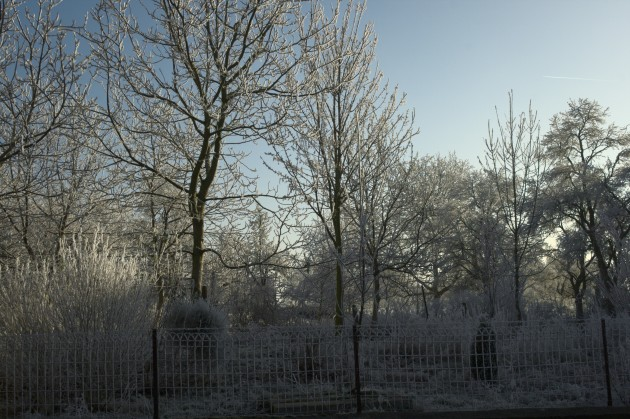 Adalberts leicht verwunschen aussehender Garten
