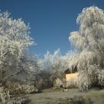 Winter 2007 Garten