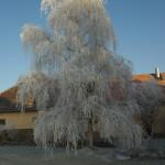 Winter 2007 Birke