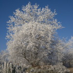Winter 2007 Strauch und Baum