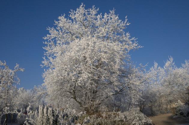 Vereister Kastanienbusch und Walnussbaum