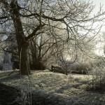 Winter 2007 Baum und Sträucher