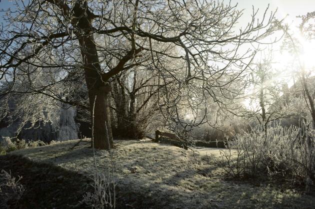Vereister Walnussbaum und Johannisbeersträucher