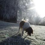 Winter 2007 Kira
