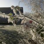 Winter 2007 Rot